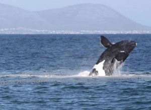 things to do in hermanus, Baleens Hotel, Hermanus, baleens restaurant and bar, accommodation, accommodation hermanus,hotels hermanus, cosy and comfortable accommodation, child friendly hotels, whale watching hermanus