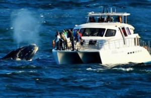 Whale Watching, Hermanus