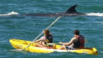 Kayaking in Walker Bay, Hermanus
